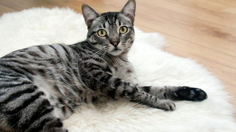 Problemy z kleszczami u kotów