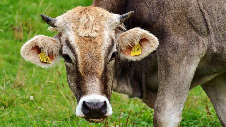 Wygodne poidła dla bydła
