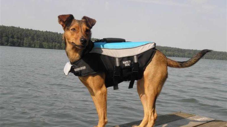 Kamizelka ratunkowa dla psa – jaką wybrać? Gdzie kupić?