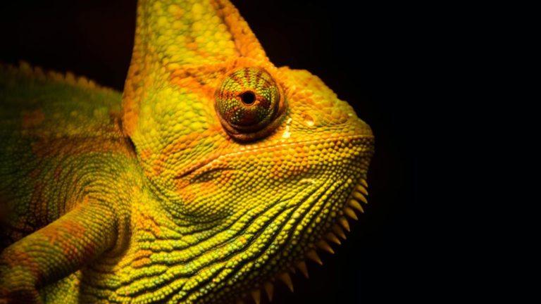 Nie radzisz sobie z wyborem terrarium dla gekona?